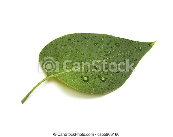 green leaf - csp5906160
