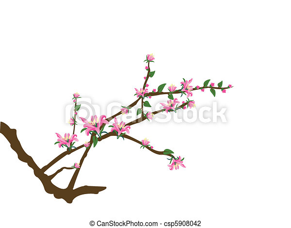 tree twigs and pink flowers - csp5908042