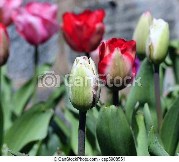 Spring began - csp5908551