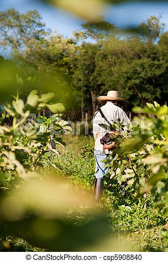 rural, trabajador - csp5908840