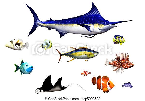 Clip art von fische verschieden fische arten in for Fische arten