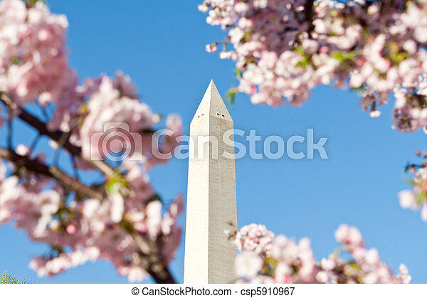 Washington Monument Pink Cherry Blossoms, DC, USA - csp5910967