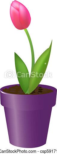 Tulip In Pot - csp5917156