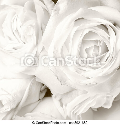 White roses in close up - romantic background