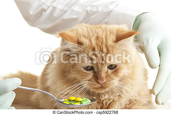 cat veterinary look animal hand - csp5922768