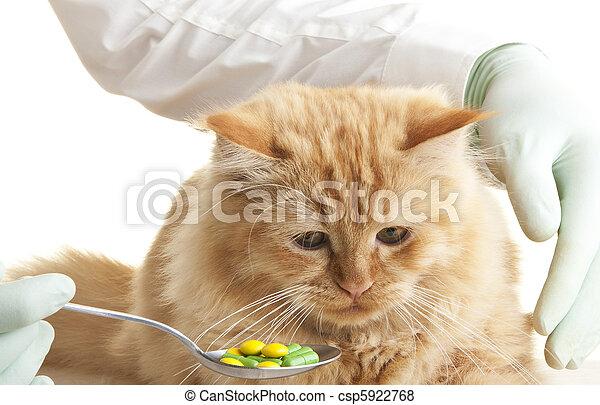 Macska, állatorvos, néz, állat, kéz - csp5922768