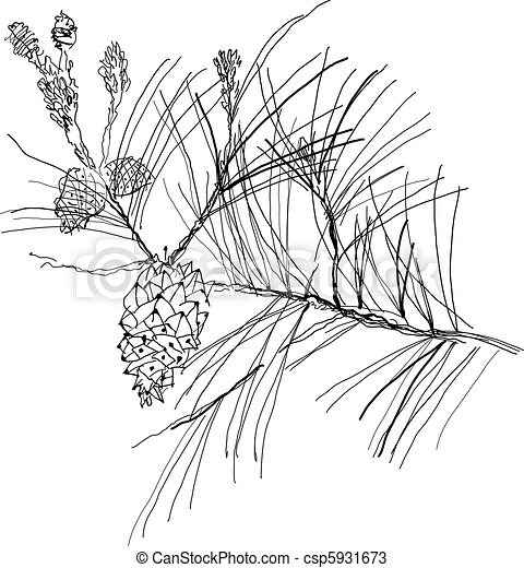 fir-tree branch - csp5931673