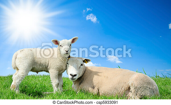 Mother sheep and her lamb in spring - csp5933091
