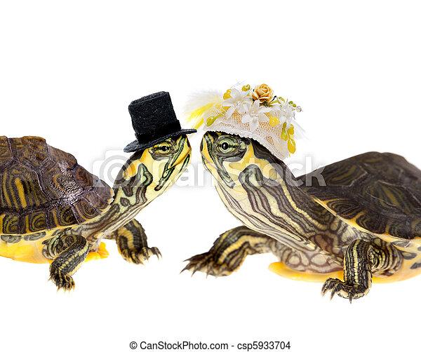 Photo de tortue couple mariage deux rigolote peu - Image tortue rigolote ...