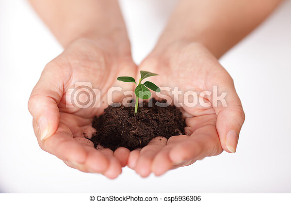Isolated shot of a fresh shoot, growing from a small pile of earth held in hands. - csp5936306