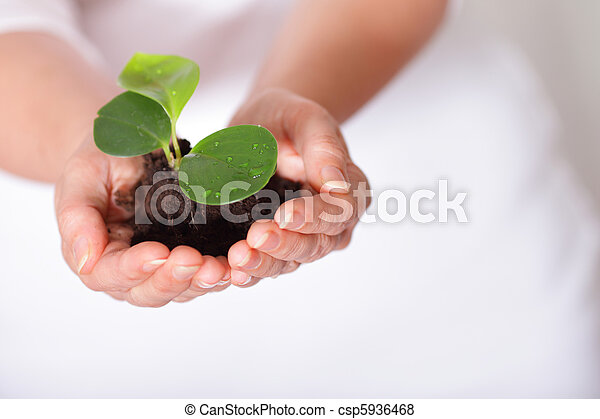 Isolated shot of a fresh shoot, growing from a small pile of earth held in hands. - csp5936468