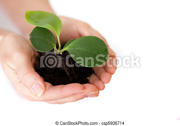 Isolated shot of a fresh shoot, growing from a small pile of earth held in hands. - csp5936714