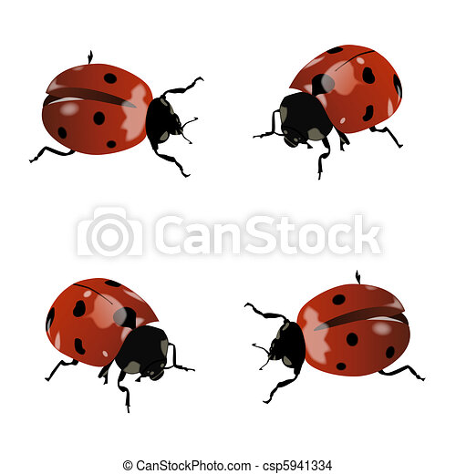 Realistic ladybug drawing - photo#39
