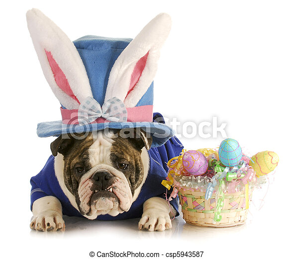 easter dog - csp5943587