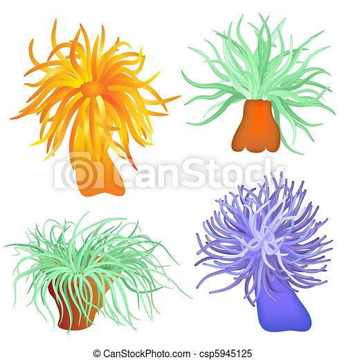 various sea anemone - vector - csp5945125