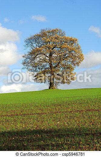 Tree Autumn Farming Landscape. - csp5946781