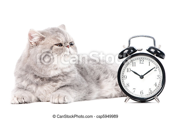 grey exotic kitty cat and clock - csp5949989