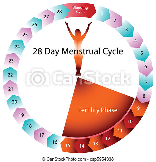 Menstrual Cycle Fertility Chart - csp5954338