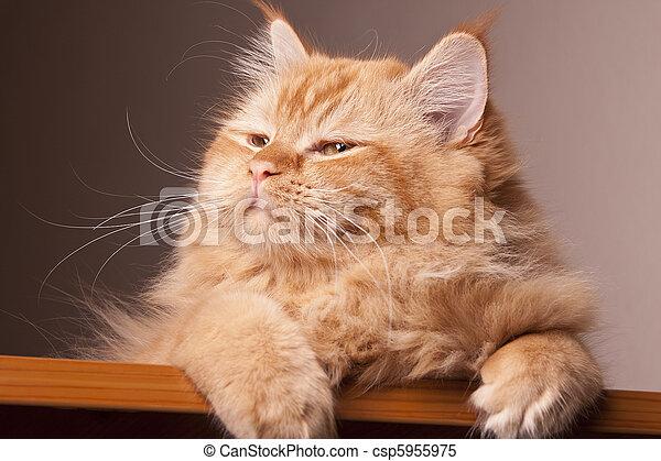 cat happy eyes expression animal - csp5955975