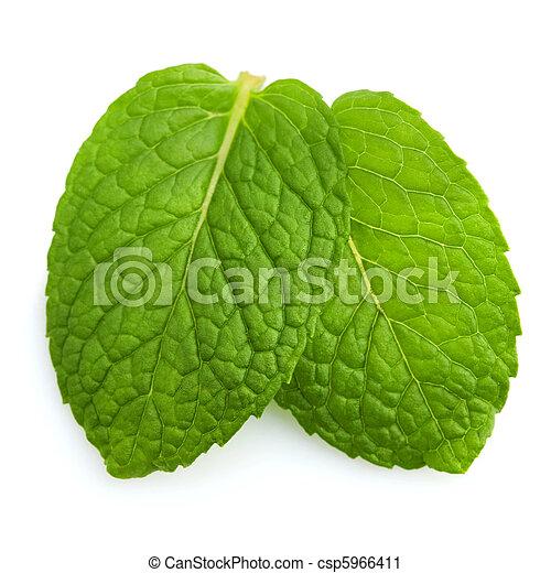 Mint leaves - csp5966411