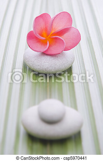 Nature on a palm leaf - csp5970441