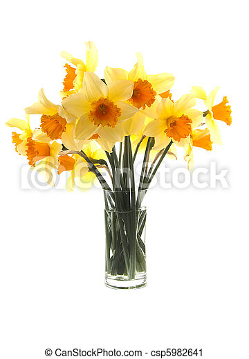 Yellow with orange daffodil flowers - csp5982641
