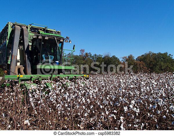 Picking Cotton - csp5983382