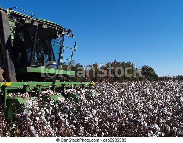 Picking Cotton Close-up - csp5983383