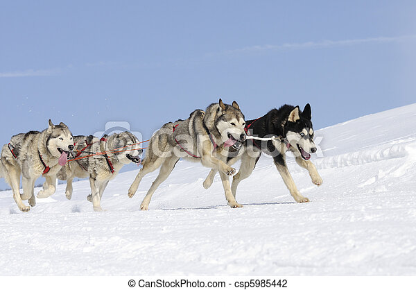 Sportive dogs in the mountain - csp5985442