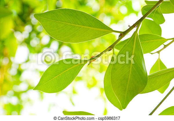 foliage - csp5986317