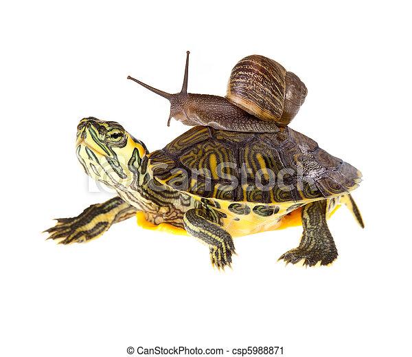 Photographies de tortue paresseux ascenseur escargot - Image tortue rigolote ...