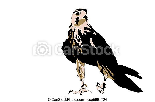 Black bird predator aggressive hawk - csp5991724
