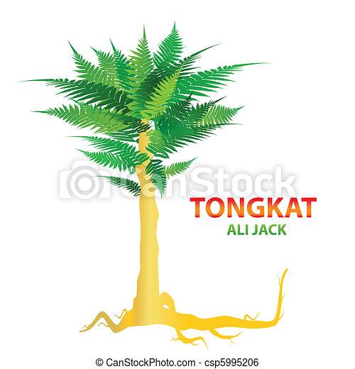 tongkat-ali-jack - csp5995206