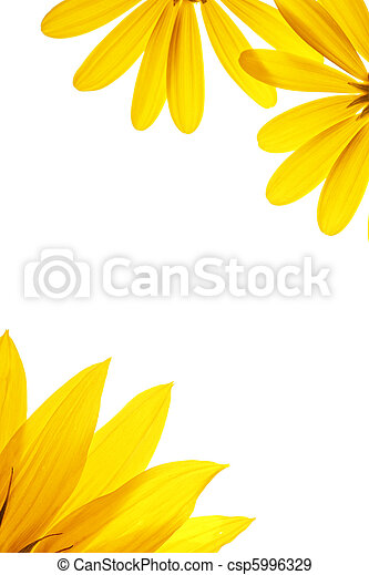 Blank white page decorated with natural sunflower details. - csp5996329