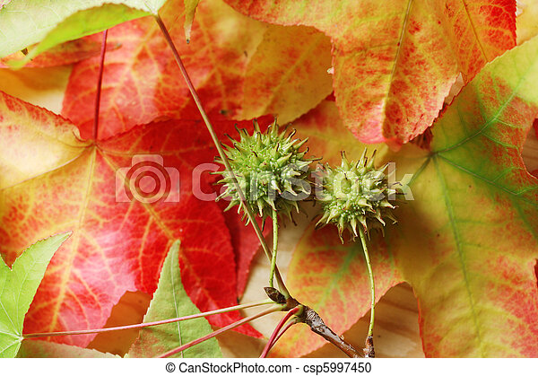Fallen autumn leaves background - csp5997450