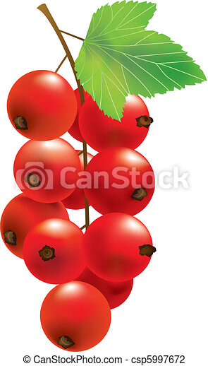 Vector red currant - csp5997672