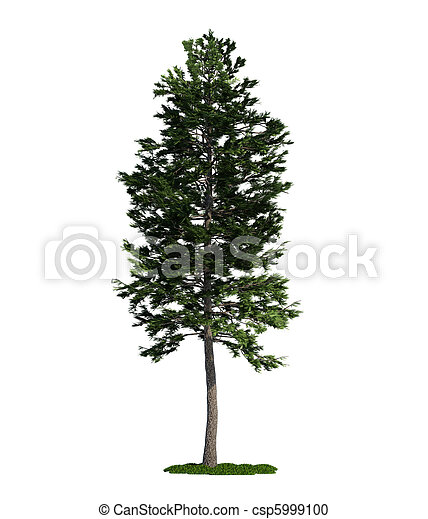 (pinus, 樹, 被隔离, 松樹, 蘇格蘭, 白色, sylvestris) - csp5999100
