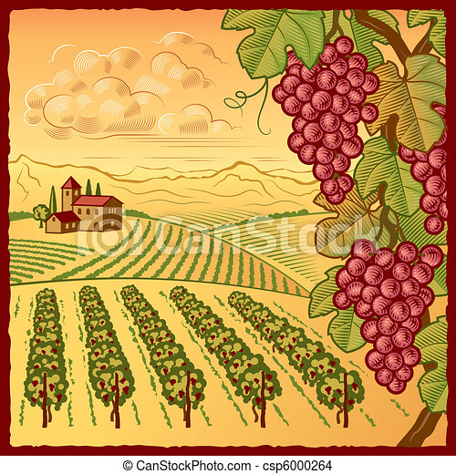 Vineyard landscape - csp6000264