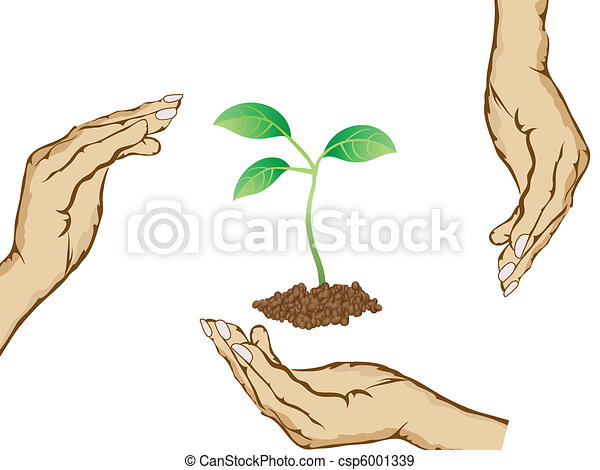 hands protecting green plant - csp6001339