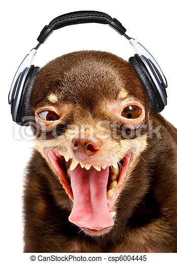 Ridiculous dog DJ. - csp6004445