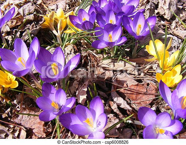 Spring has sprung - csp6008826