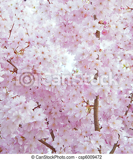 Beautiful high key bright Spring blossom image - csp6009472