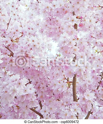 Beautiful high key bright Spring blossom image - csp6009472