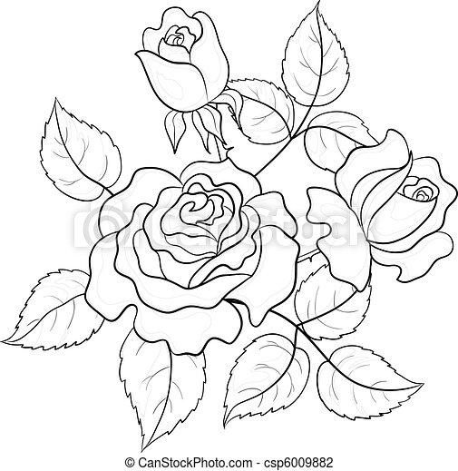 Flowers roses, contours - csp6009882