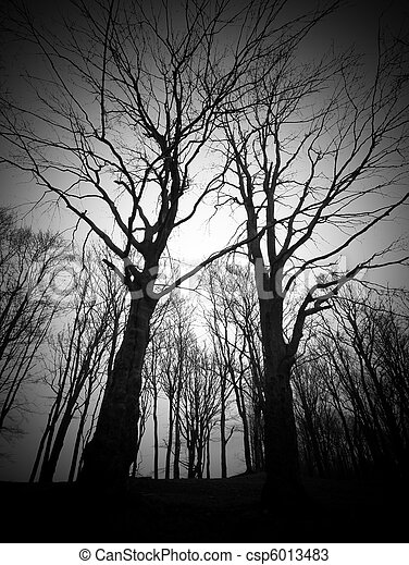 The fear in dark forest - csp6013483
