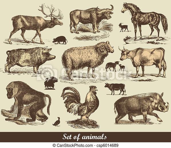 Animals - csp6014689
