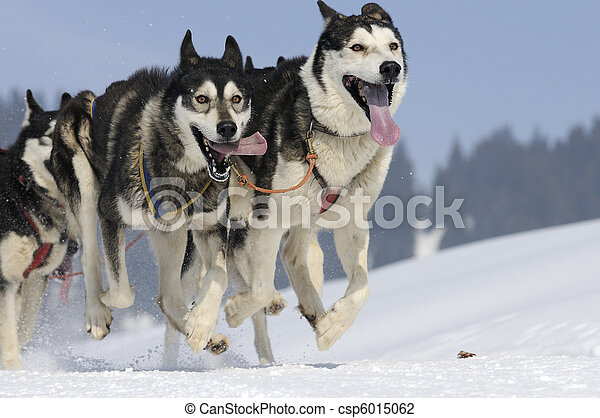 Sportive dogs in the mountain - csp6015062