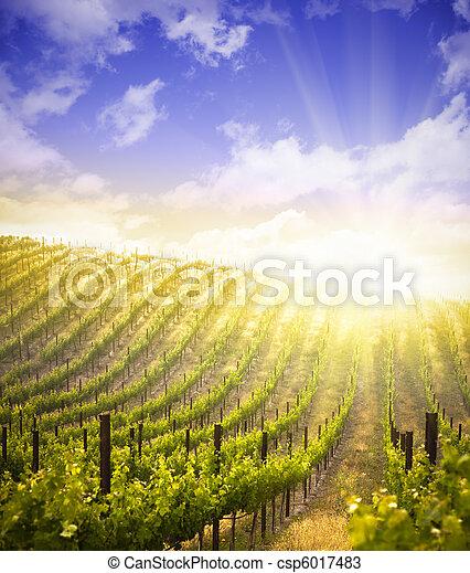 Beautiful Lush Grape Vineyard and Dramatic Sky - csp6017483