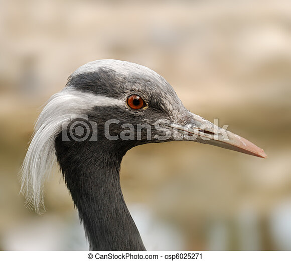 Photographies de outarde oiseau a oiseau a long for Oiseau a long bec