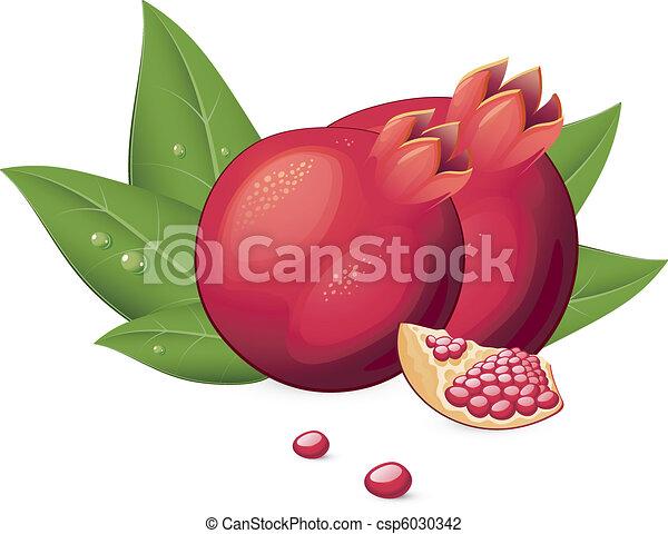 Illustration vecteur de grenade fruit vecteur illustration de grenade sur csp6030342 - Grenade fruit dessin ...